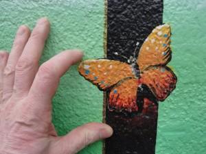 Papillon croix-roussien collé à un mur vert