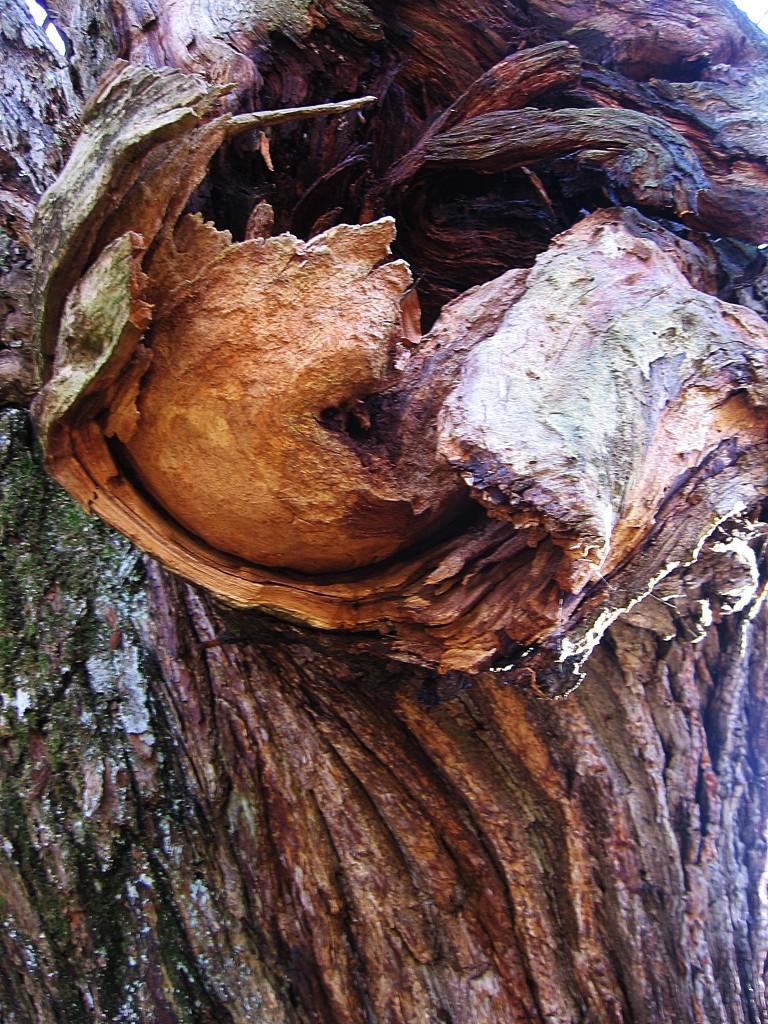 alberi monte moria 040
