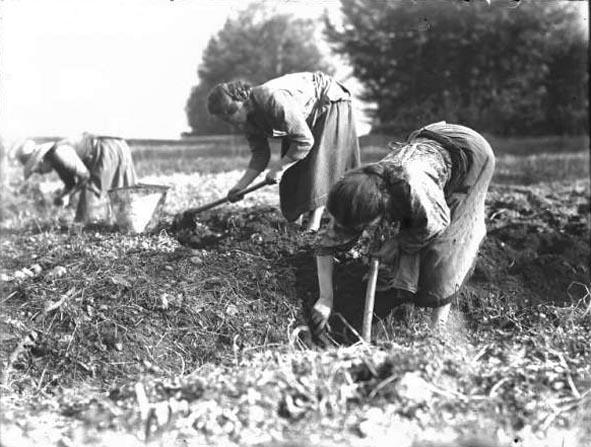 Contadine al lavoro nei campi due