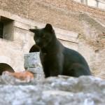 gattoColosseo