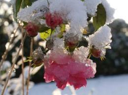 407 giardino d'inverno