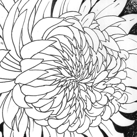 crisantemi 002