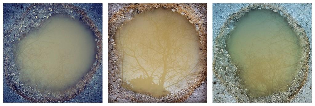 Mondo Liquido_Alberi in ambra