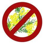 no-mimose