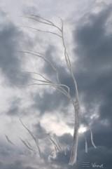 windevid