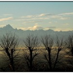 monviso-alberi-evid