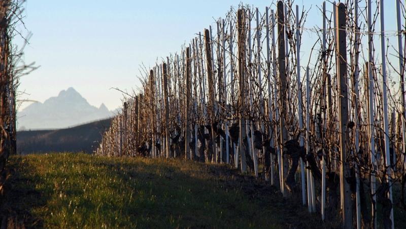 monviso-vigne