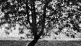ombra-dellalbero-evid