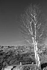 translated-tree