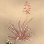 agave-evid