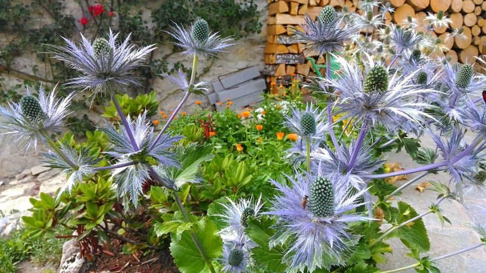 giardino-di-montagna-zarpellon