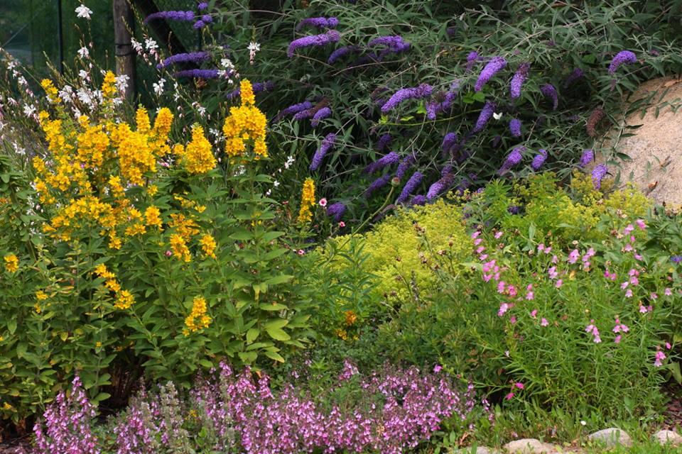giardino-due