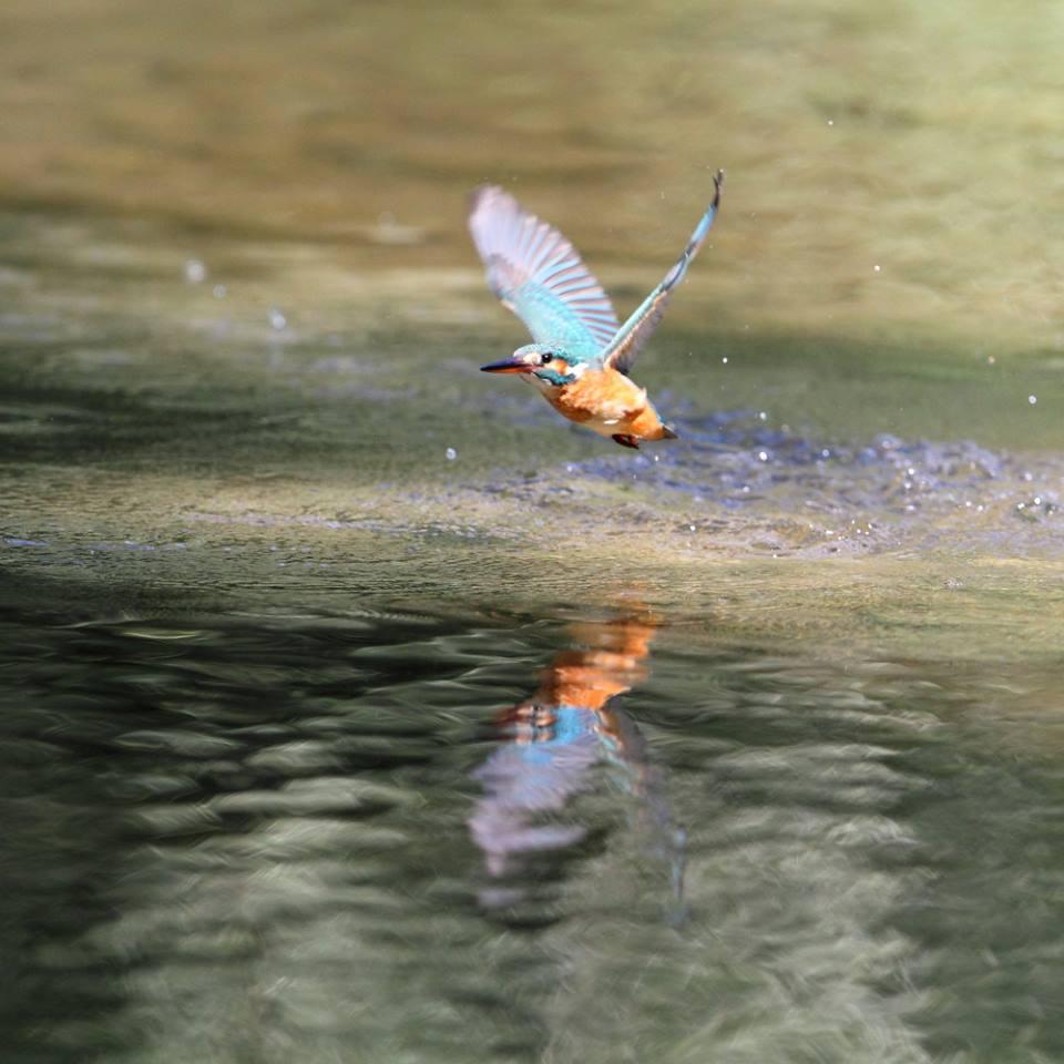 uccello-uno