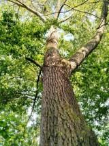 albero-e