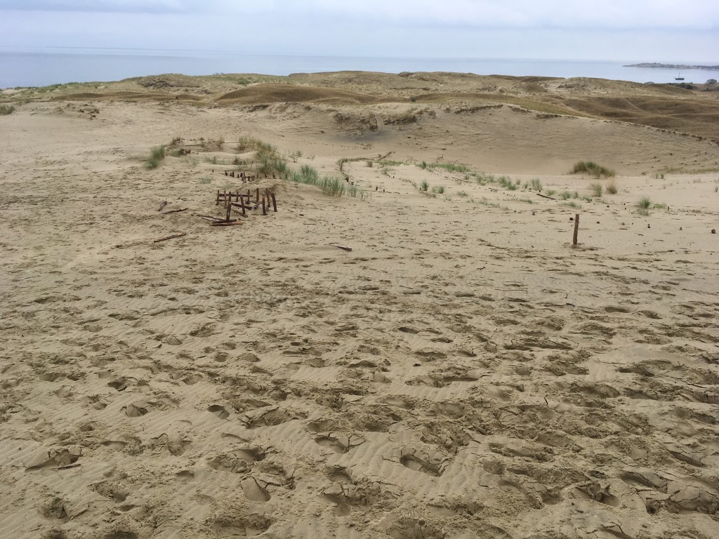 Dune a Neringa