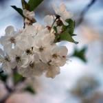 bruna-bnino-per-aprile