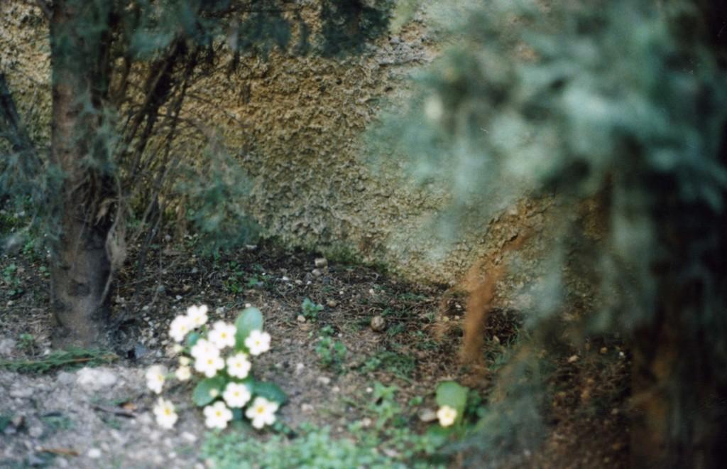 C. Sottocornola, Il giardino di mia madre e altri luoghi