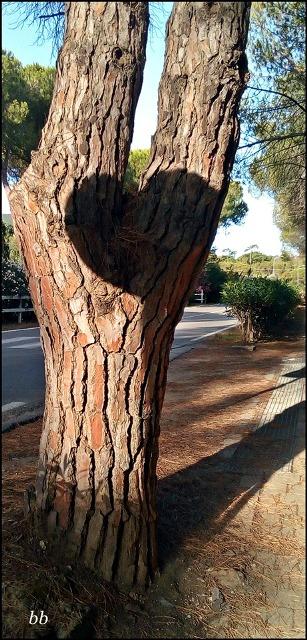 cuore-albero-bonino-per-maio