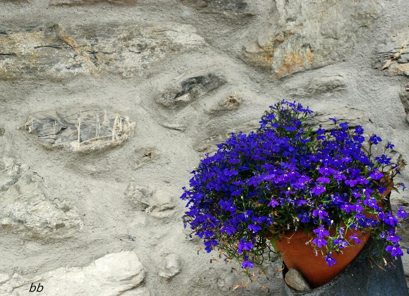 fiorellini-blu-su-pietra