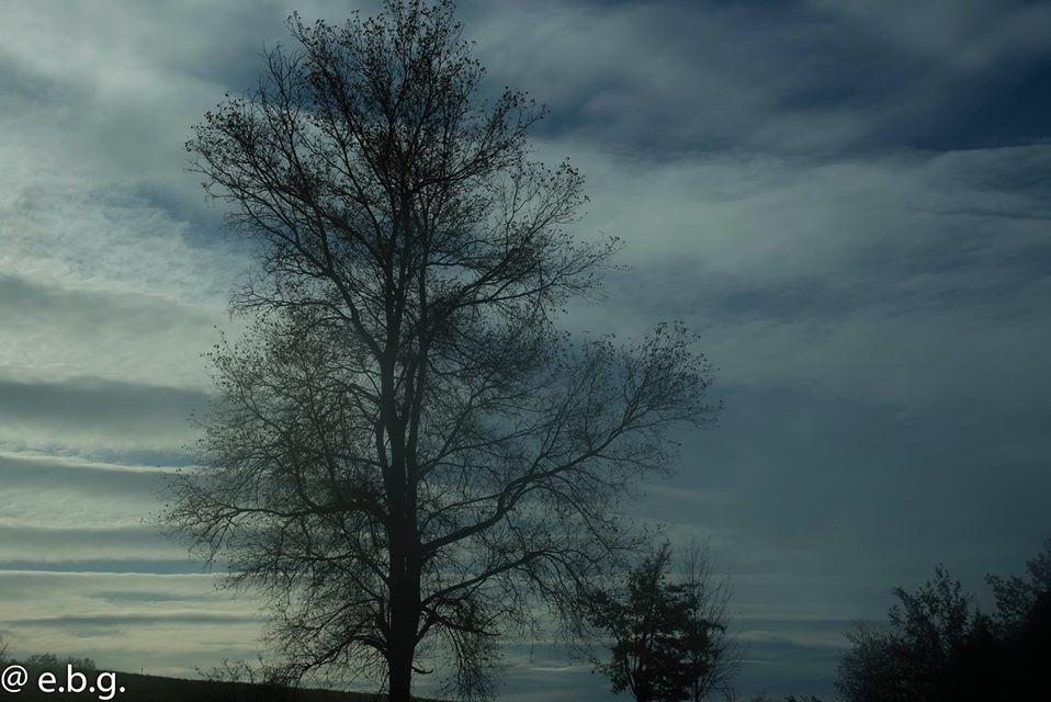 tree-eldar-akhadov