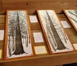 marco-goria-ratti-alberi-1