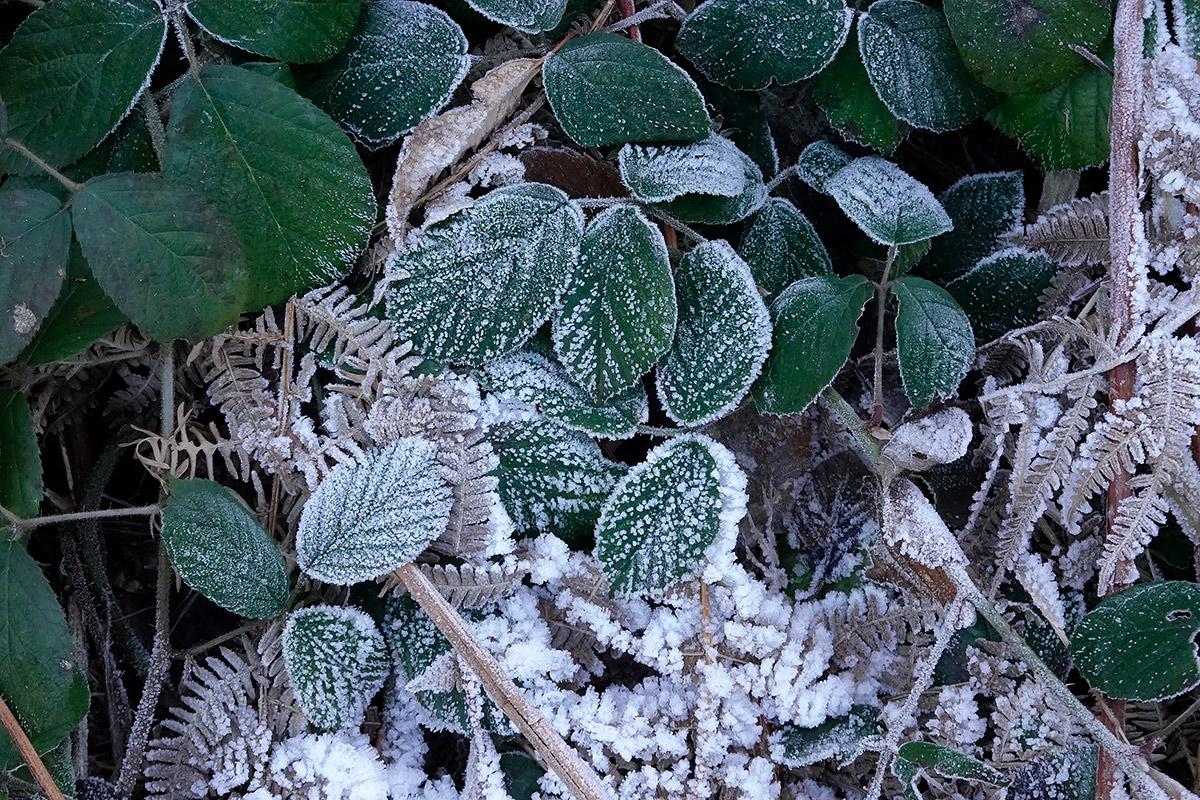 gemma-giusta-cristalli-di-neve-e-foglie-testata-febbraio-21