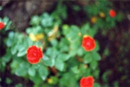 29-11-c-sottocornola-il-giardino-di-mia-madre-e-altri-luoghi