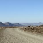 The veld