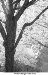 margaret_mccarthy_albero-project-poem-r