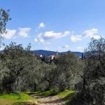 Sentiero che porta all'oratorio della Vannella